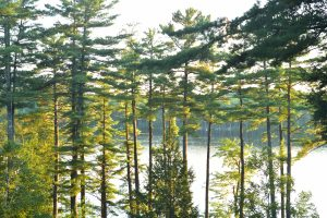 Maine forest and lake